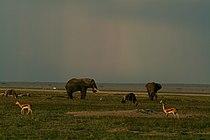 Amboseli Wildlife.jpg