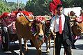 Festa dos tabuleiros (Tomar, Portugal) - Entrega do Bodo.JPG