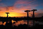 Sunset baobabs Madagascar.jpg