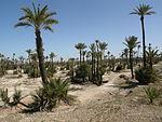 Palmeraie de Marrakech.JPG