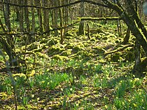 Forêt d'Arc-en-Barrois en Haute-Marne